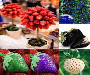 Essbare farbige Erdbeeren