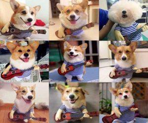 Hunde Kostüm Gitarre
