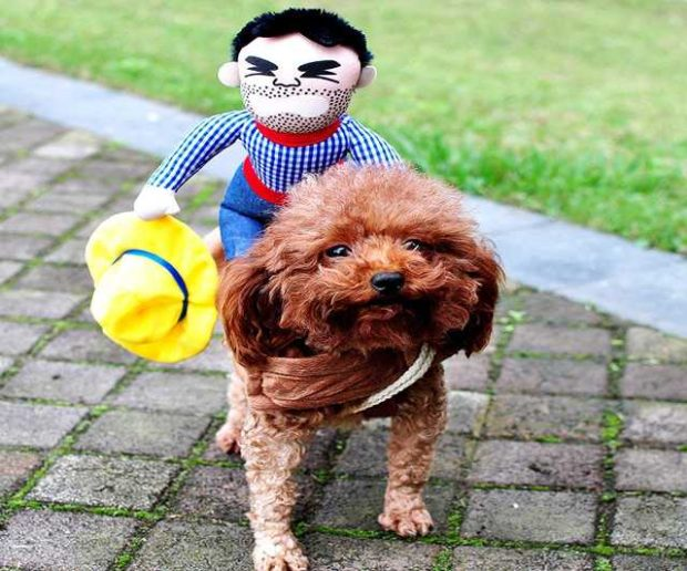 Hunde Kostüm Halloween