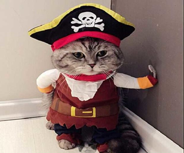 Katzenkostüm Halloween
