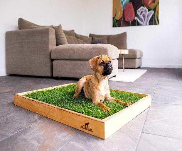 Rasen Hundeklo