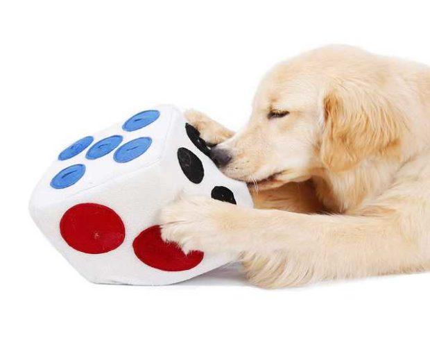 Schnüffelwürfel für Hunde