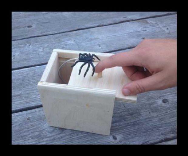Spinnen Scherzartikel Box